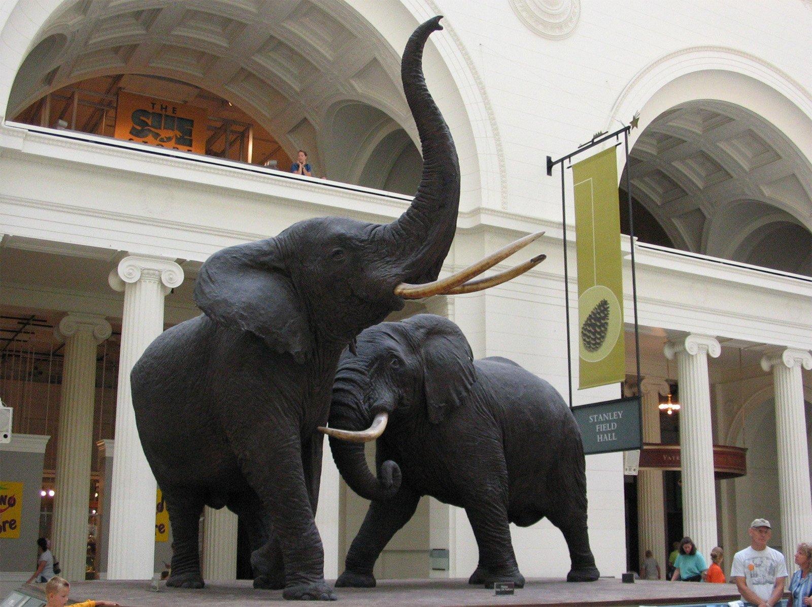 Chicago_Illinois_-_Elephants_-_Field_Museum