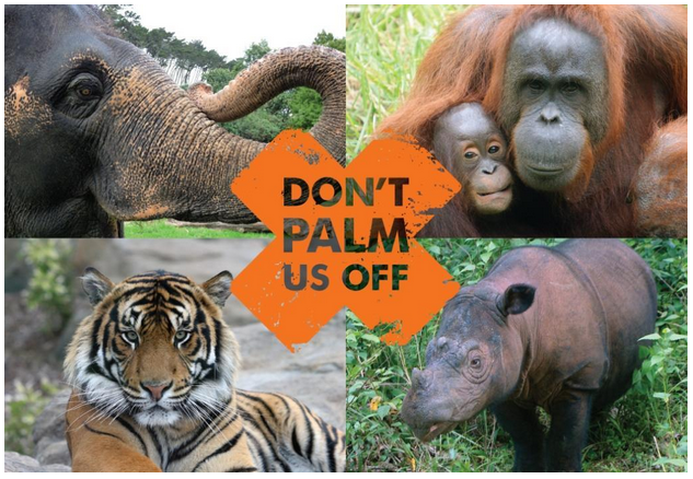 The Scariest Part of Halloween? Palm Oil in Your Treats