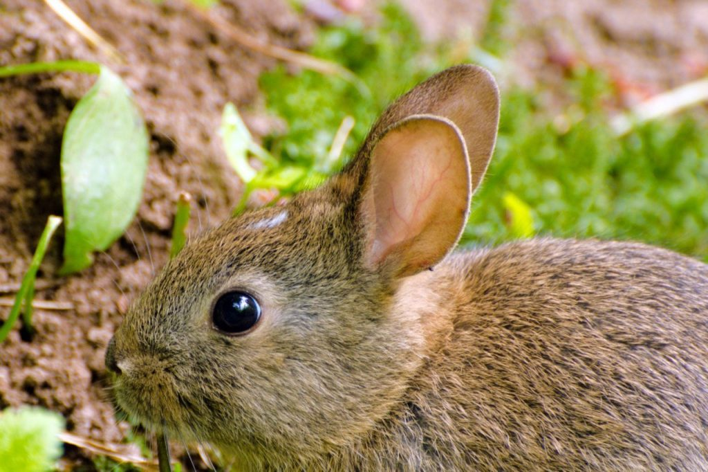 connecting to nature in fitness: bunny in the park