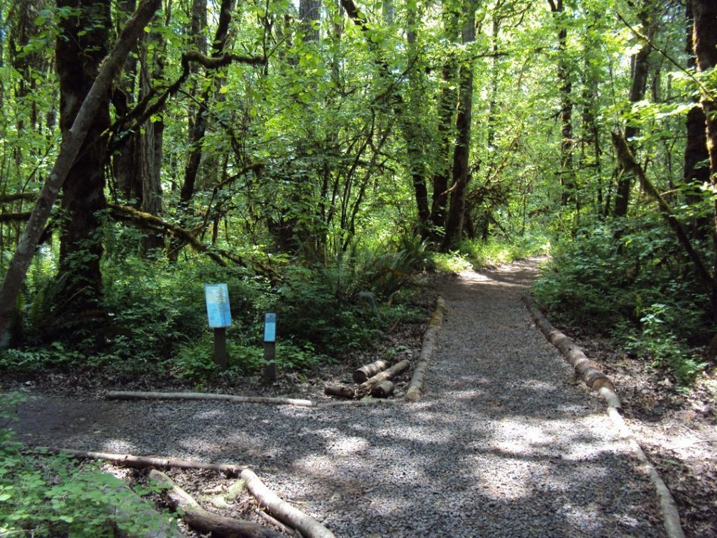 connecting to nature in fitness: tualatin_hills_nature_park fork in the road