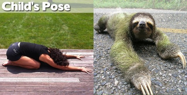 Be flexible in your fitness routine: Animals-Demonstrating-Yoga-Poses