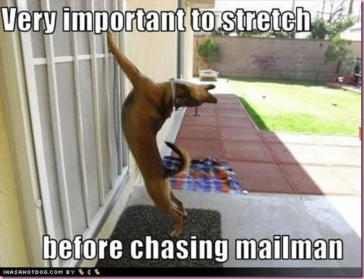 Be flexible in your fitness routine: funny dog pictures important stretch