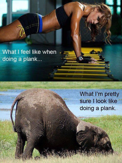 Be flexible in your fitness routine: plank elephant