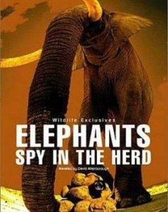 spy in the herd