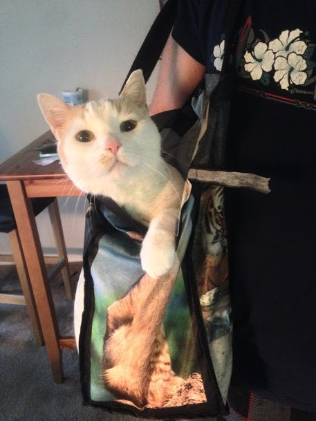 This bag is not his cat carrier, but he is just as comfy being carried in this grocery bag as getting in his carrier