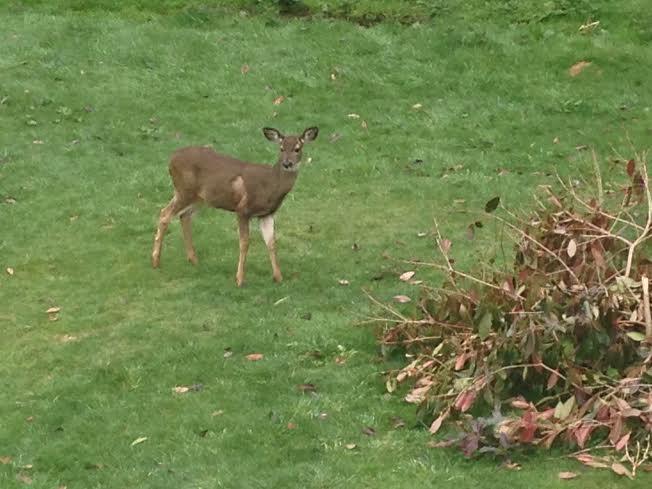 Morning neighborhood watch