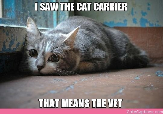 i-saw-the-cat-carrier-that-means-t