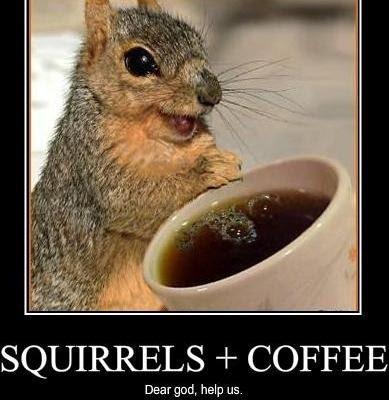 squirrel caffeine coffee hammy over the hedge dear god no
