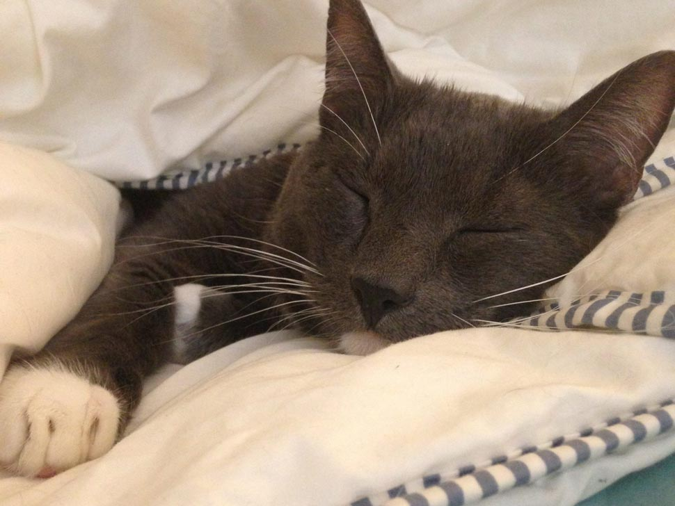 20 Days of Eco-Wellness, Day 15: Cat Naps and Dolphin Dreams